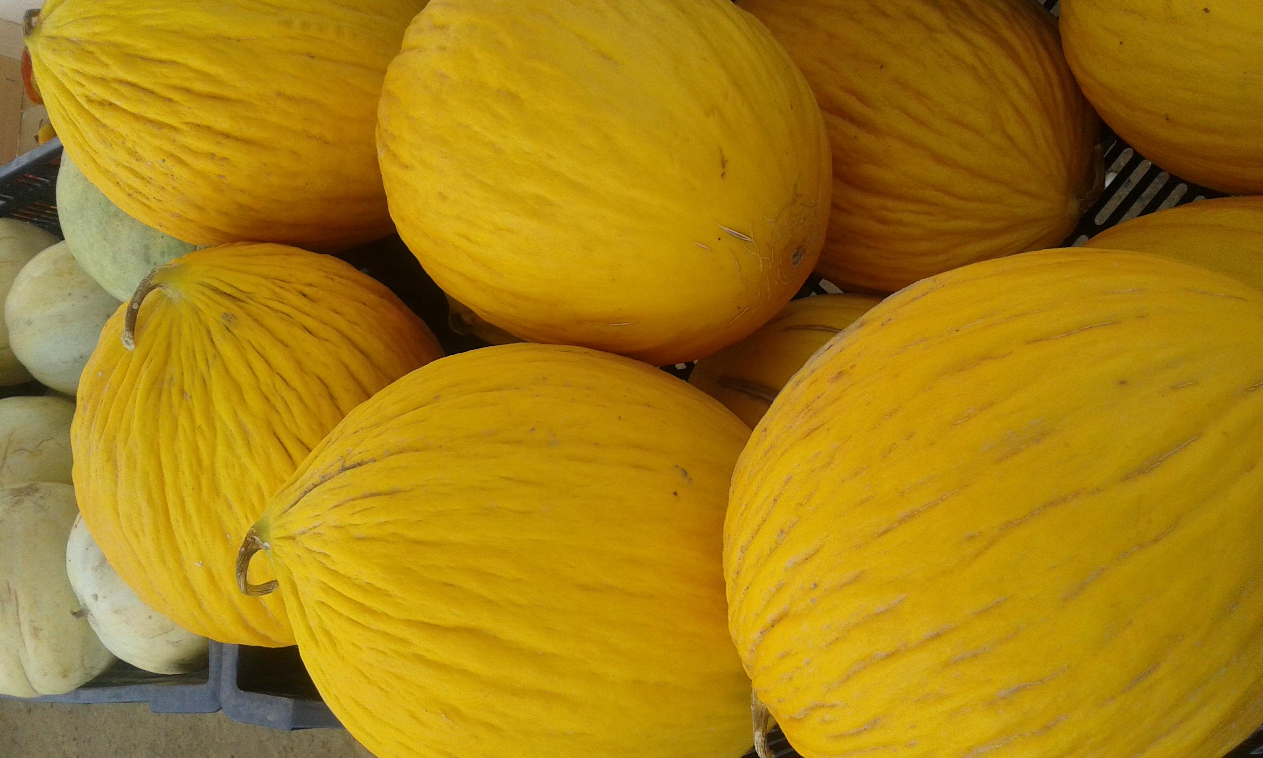 Melone giallo